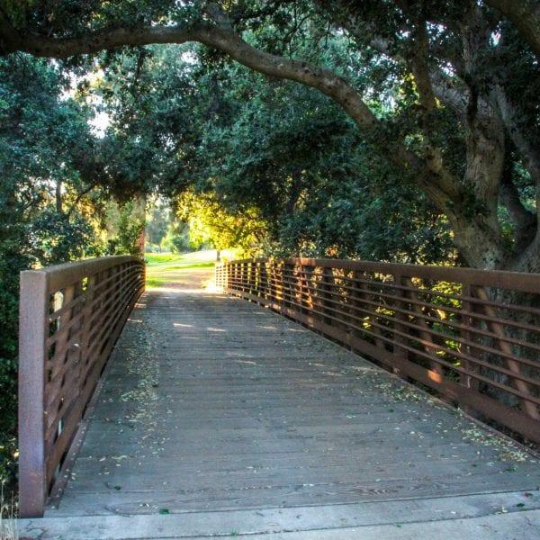 Bridge with trees overhanging