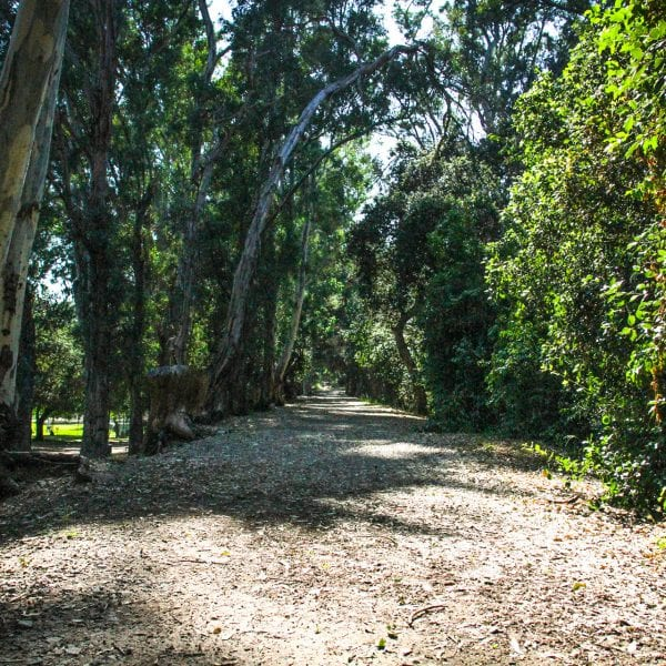 Trail with ample tree shade