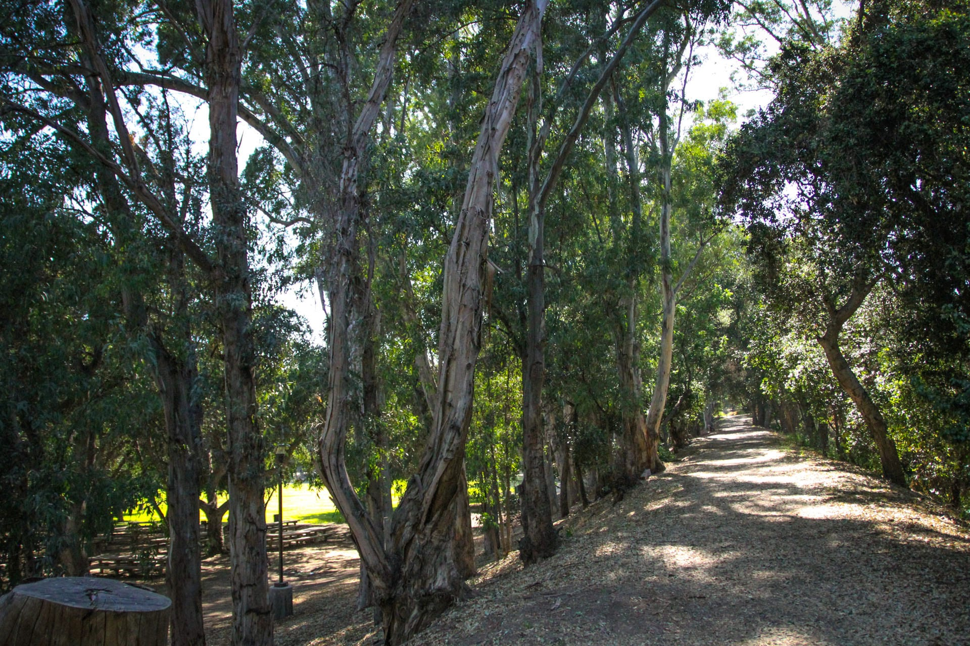 Trail with trees running along either side