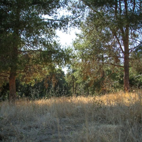 Shaded dry grass and green trees blocking the sun