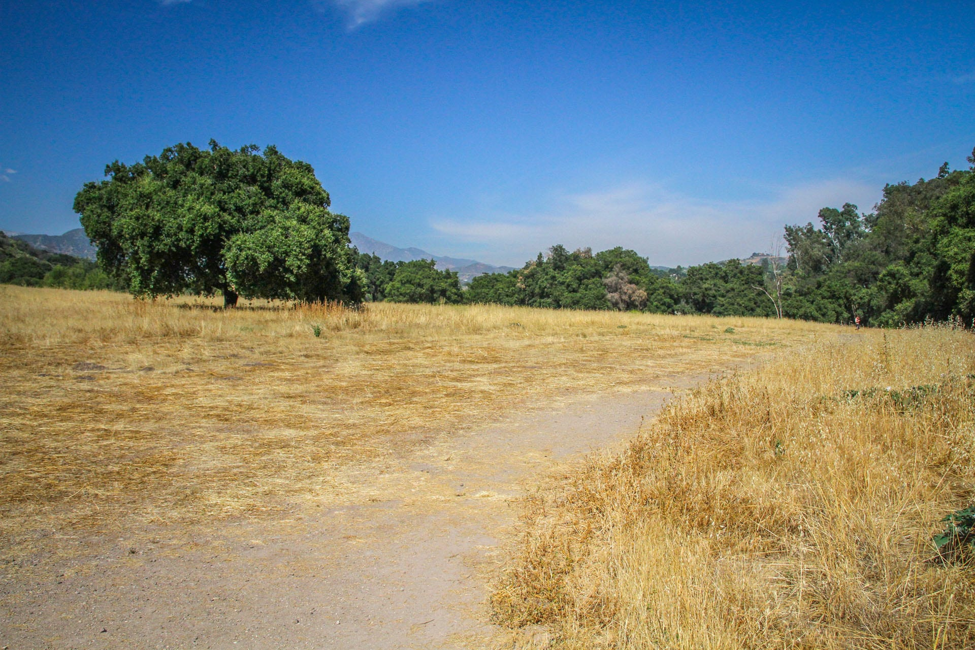 Dirt trail through dry grassy field and trees