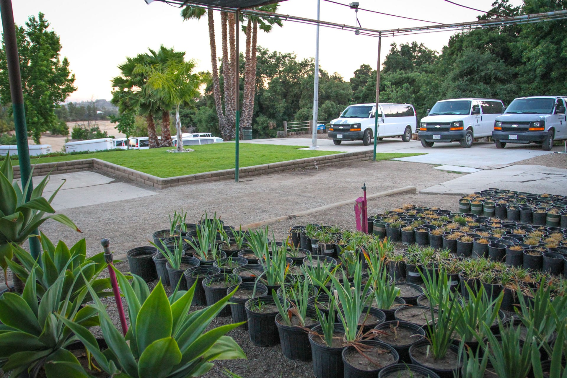 Potted plants, cars parked nearby