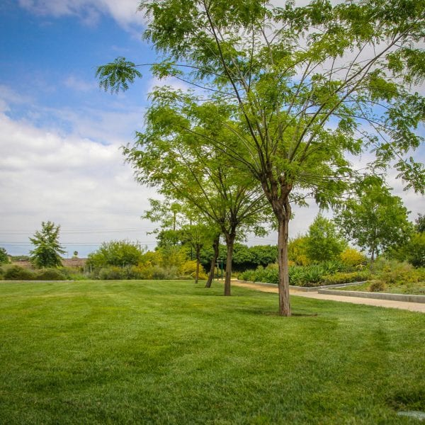 Trees, grass and a concrete walkway