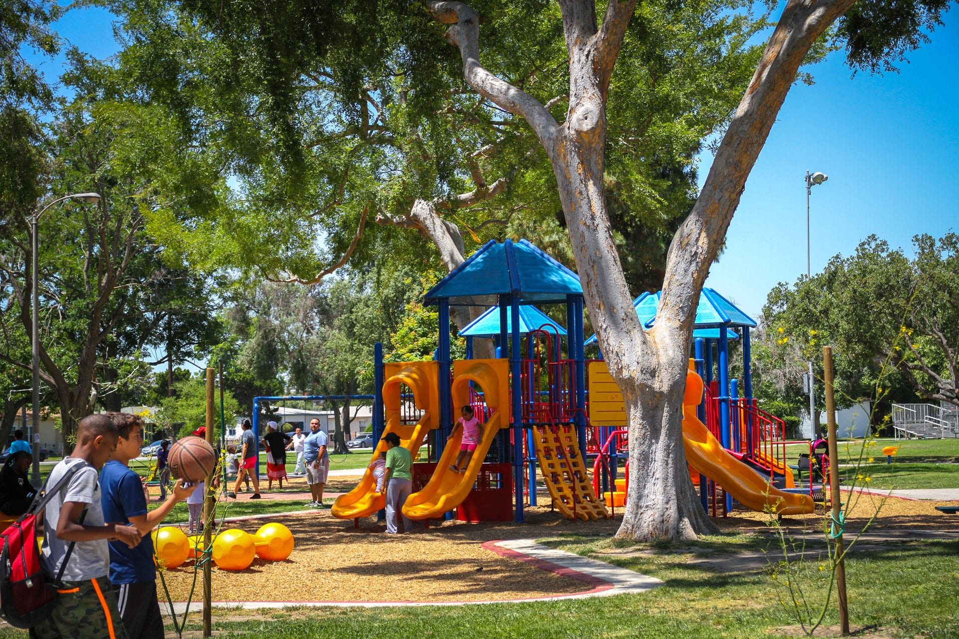 Trees and people on playgrounds