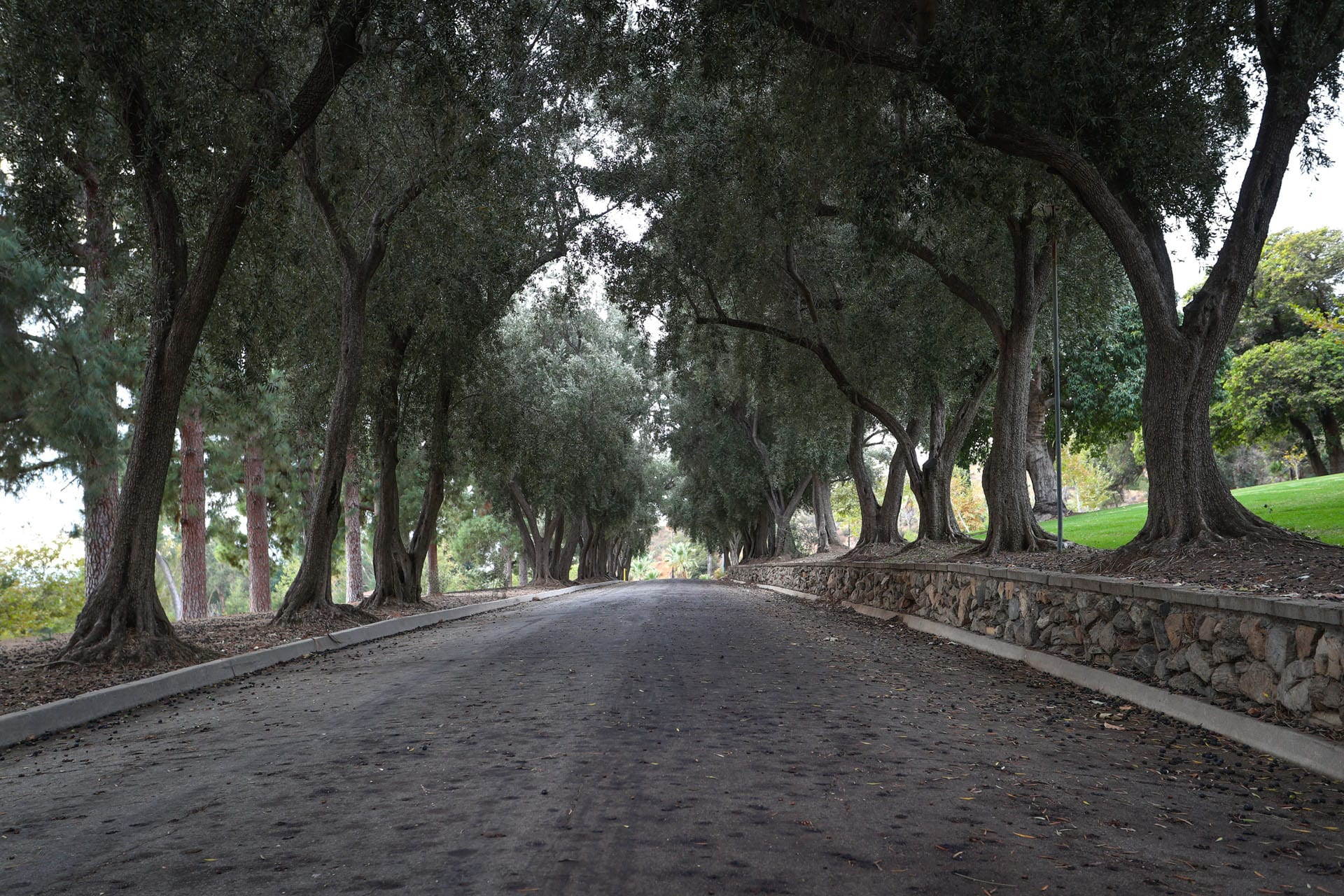 Paved path lined with trees