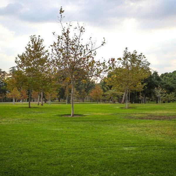 Open lawn with scattered trees