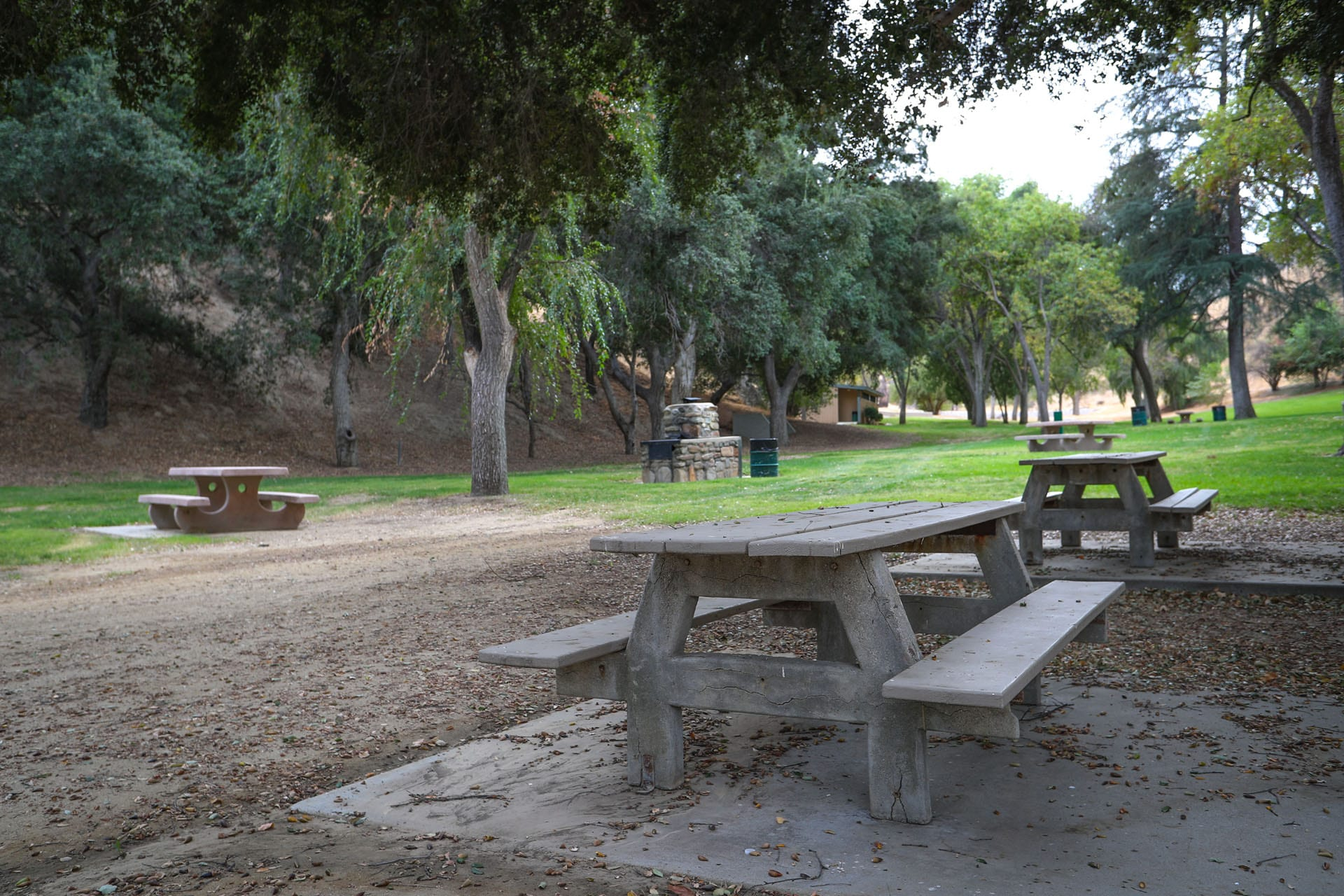 Picnic tables in a valley-like grass area with trees