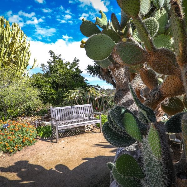 A bench, a dirt path and cacti in a garden