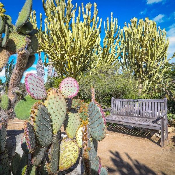 Bench next to a dirt walkway through a garden with cacti