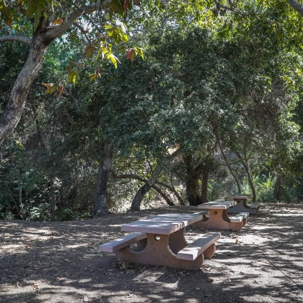 Picnic tables among trees