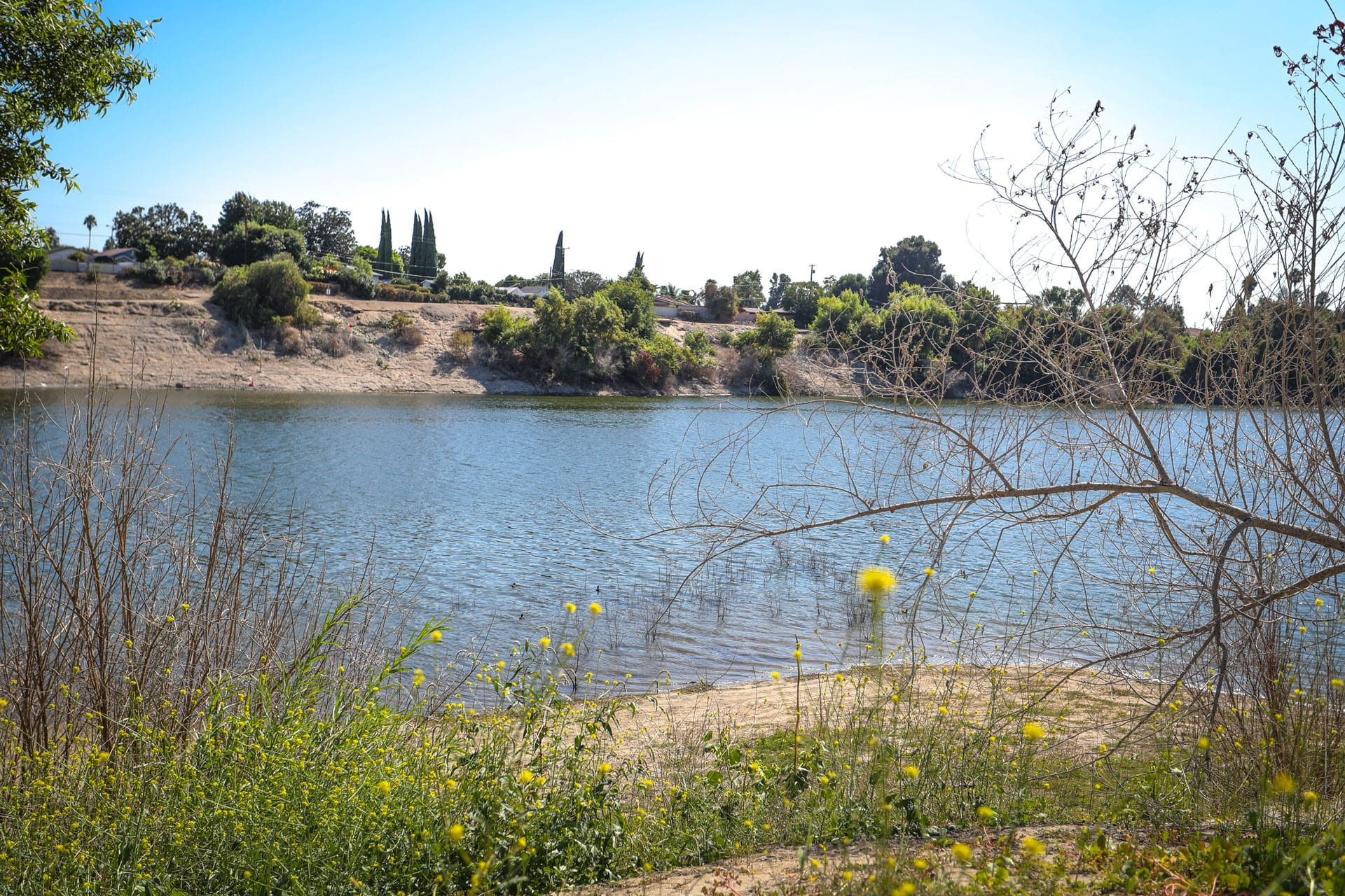 Yellow flowers in foreground, lake in background