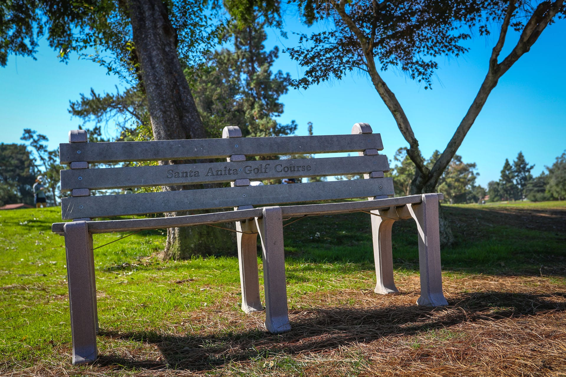 Bench in front of tree
