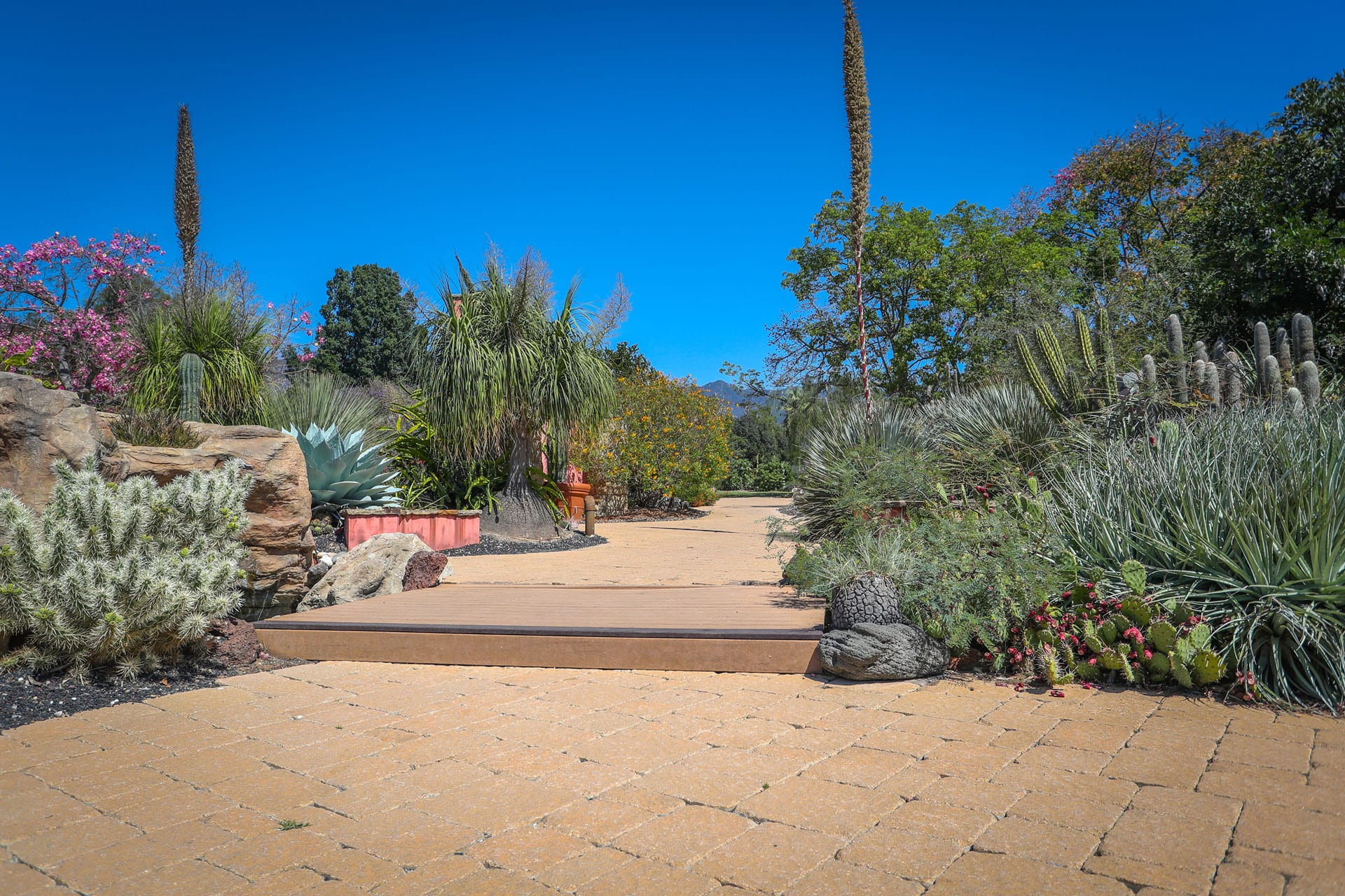Dirt path and cacti