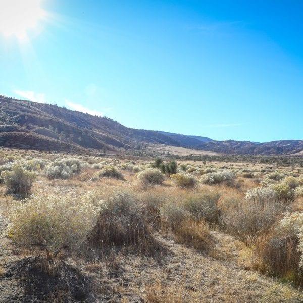 Shrubbery in the desert. Bright sun above