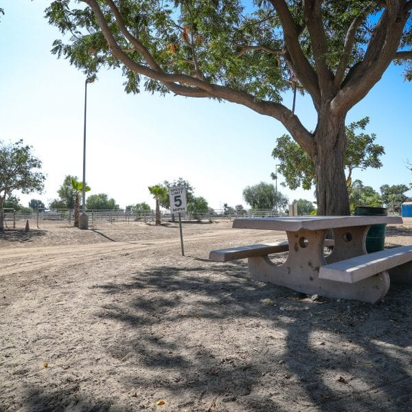 Adobe picnic table next to tree in dirt lot