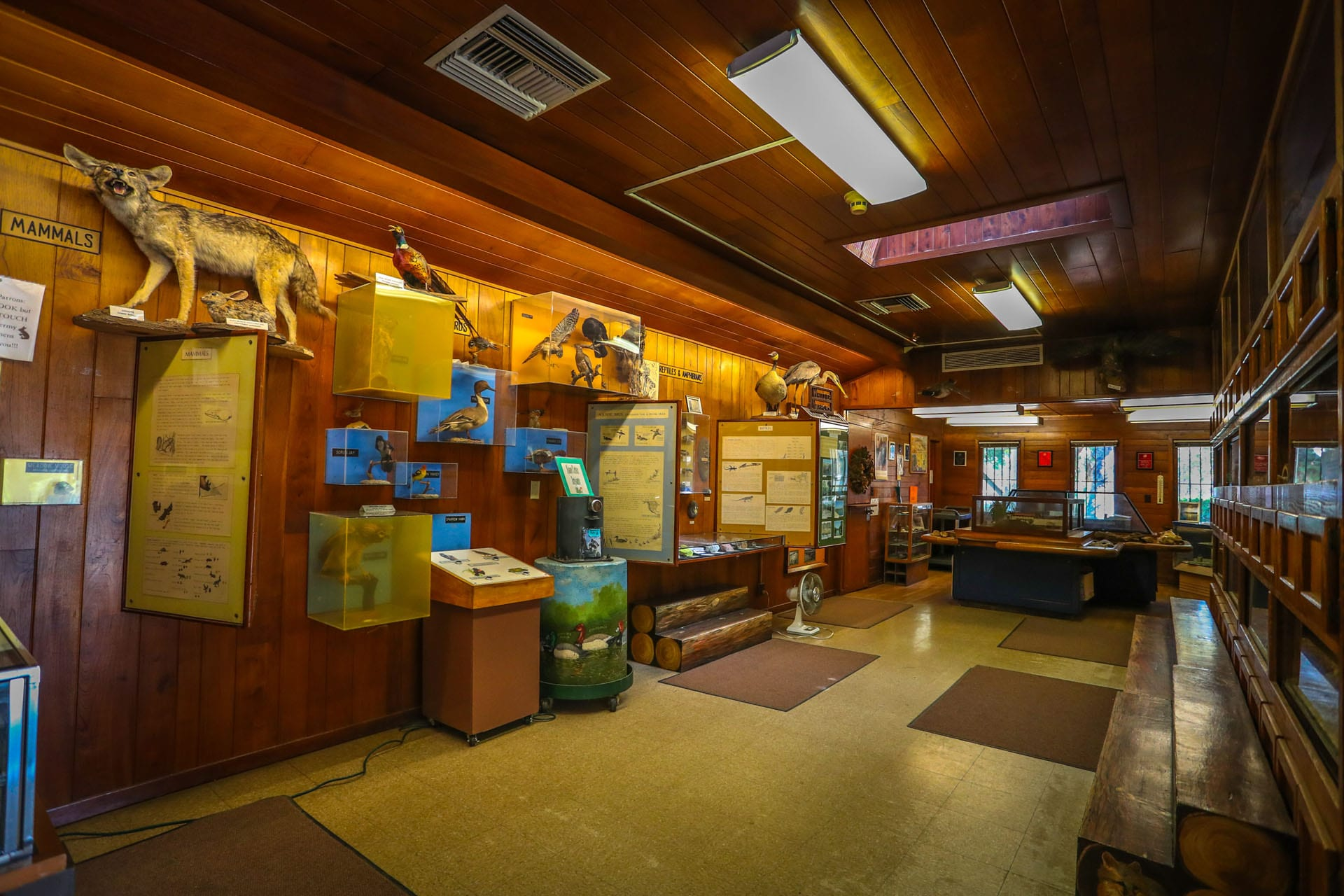 Exhibits of animals of Whittier Narrows inside the museum