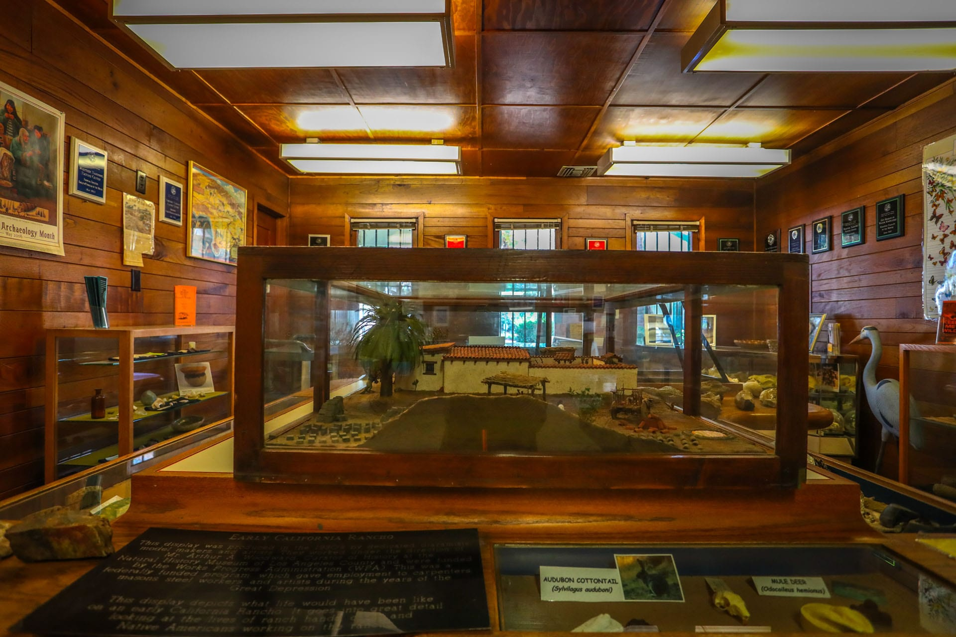 Displays in the nature center museum