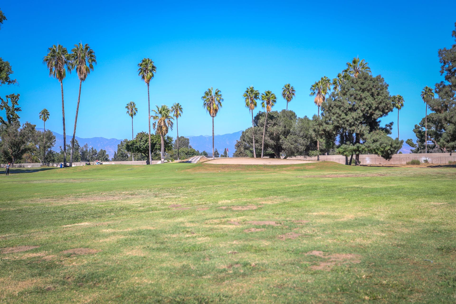 Open lawn and palm trees