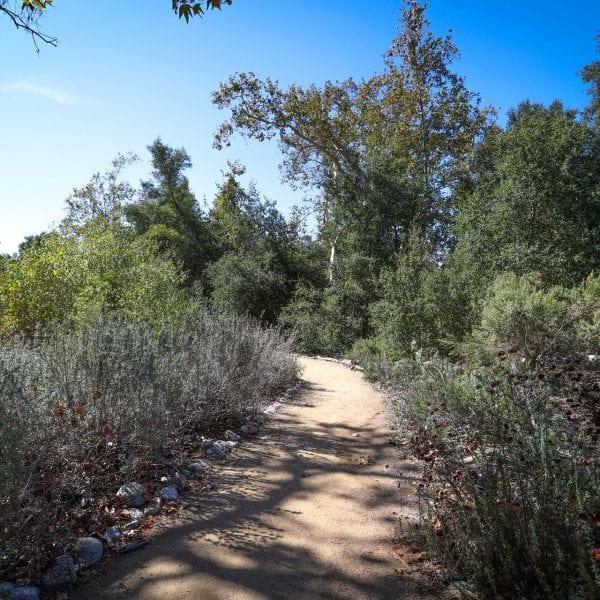 Dirt path among shrubs