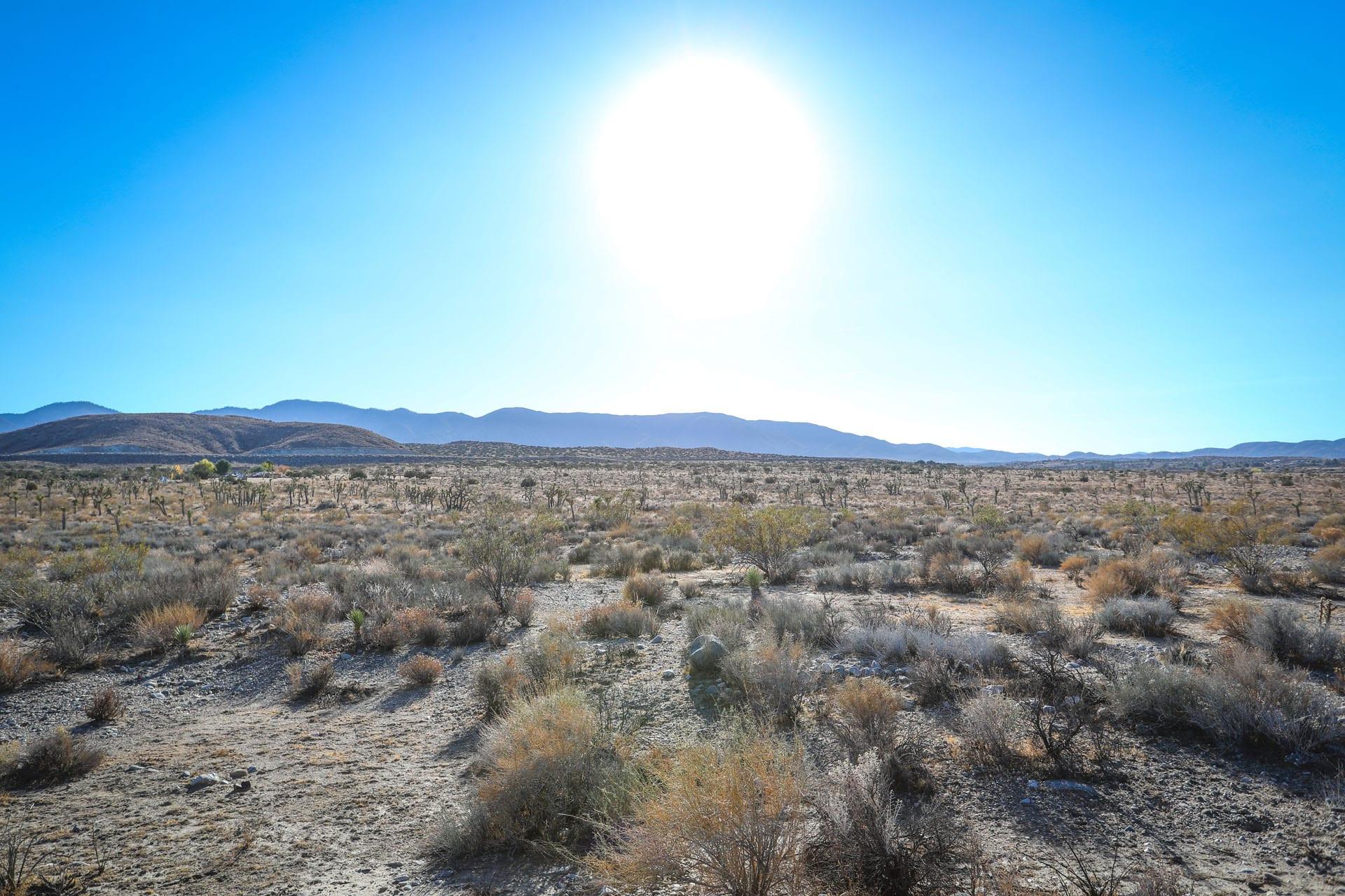Desert field, bright sun