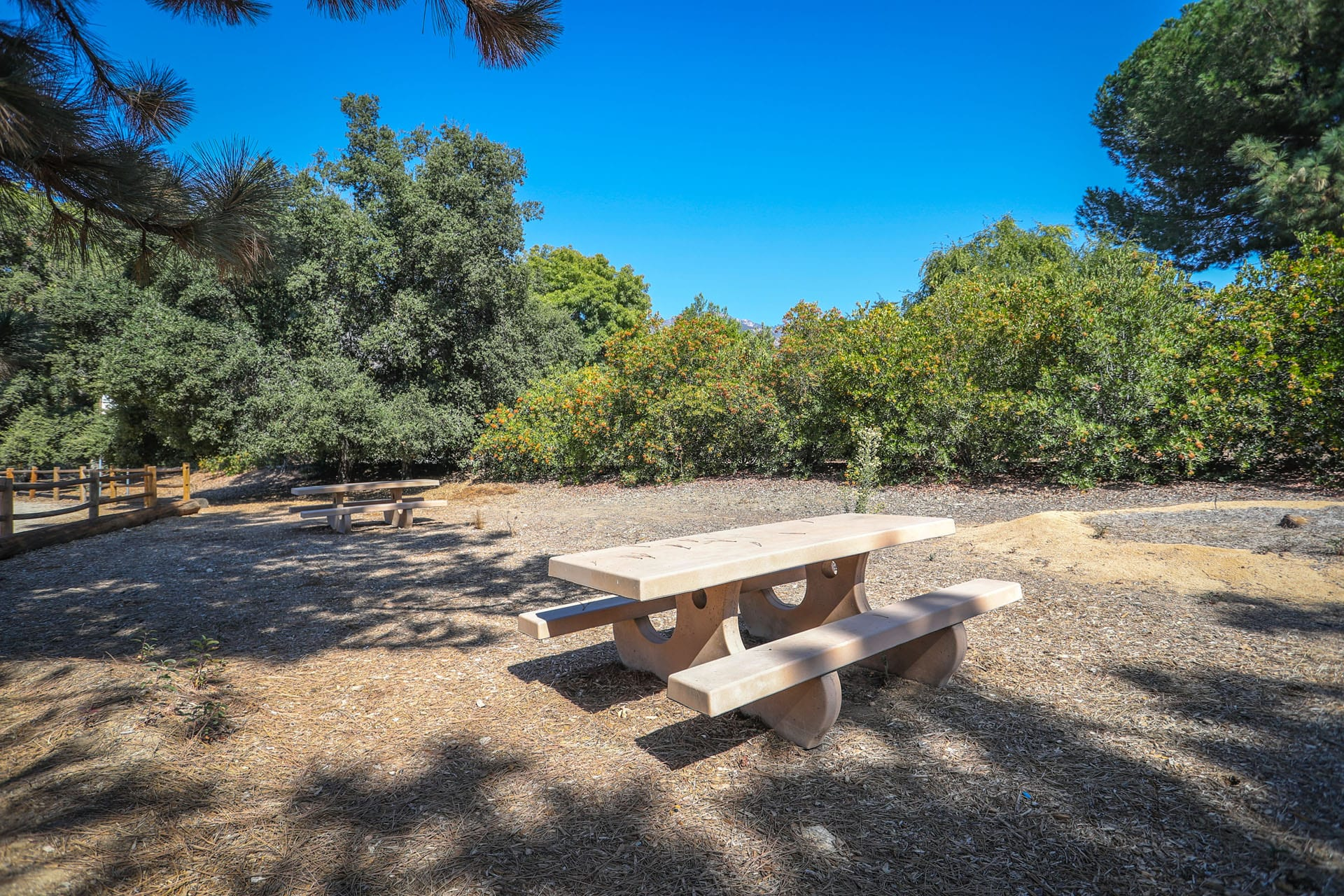 Picnic tables shaded by trees