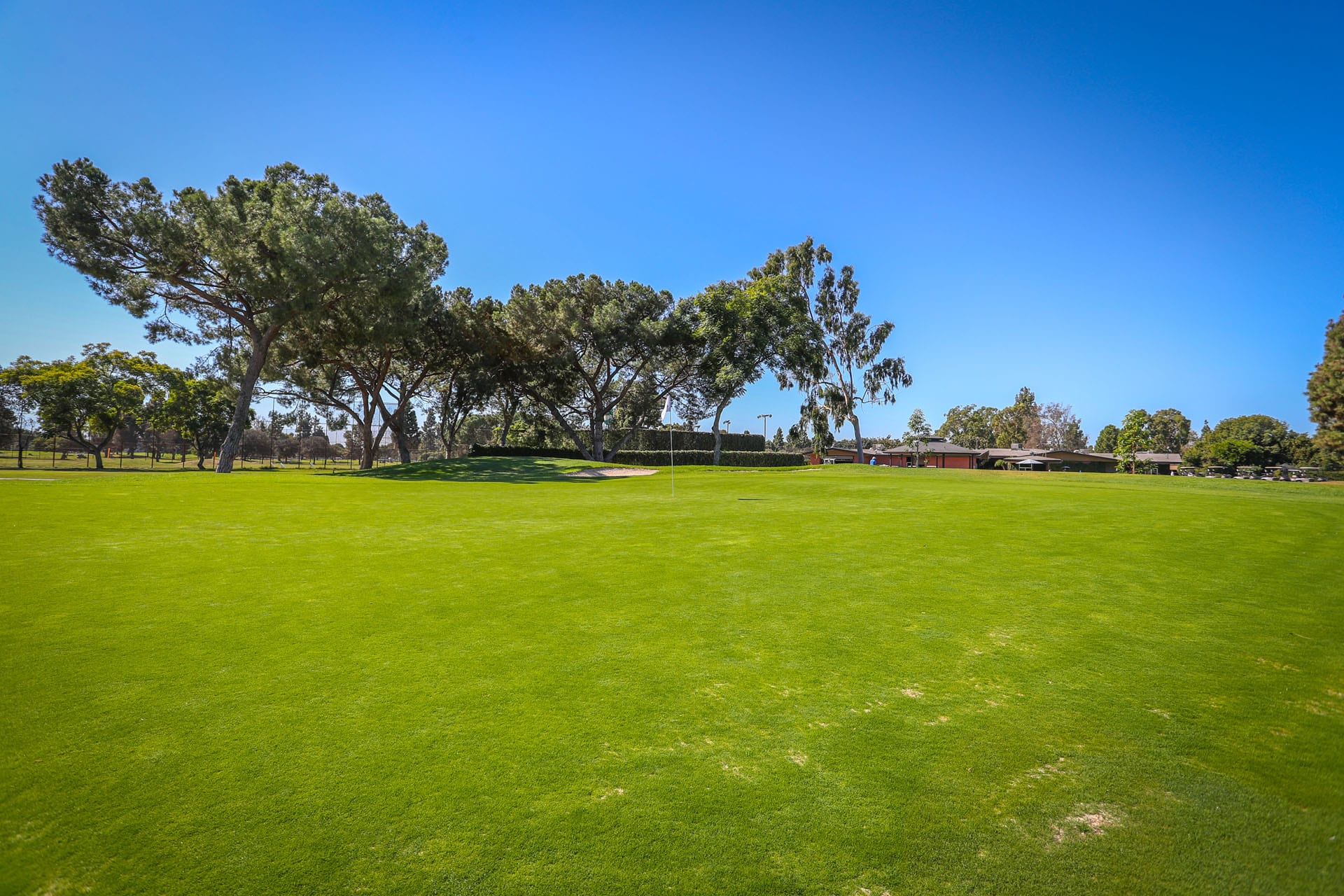 Wide open grass area and trees