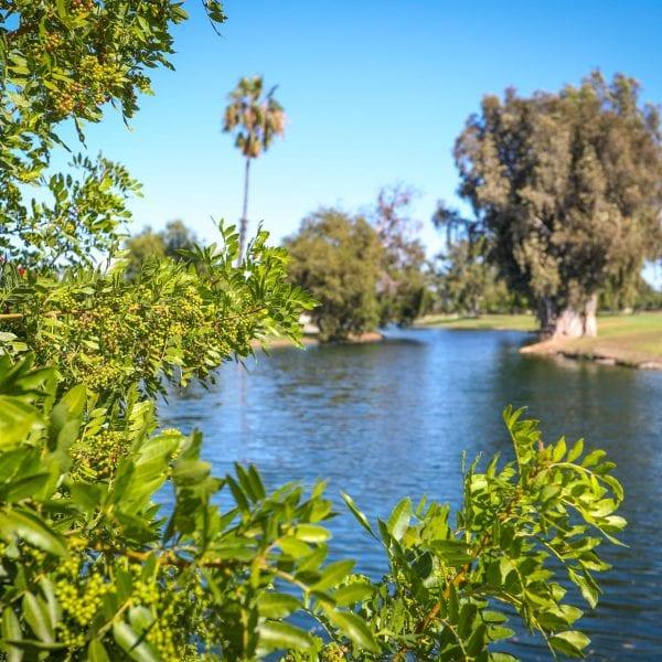 Leaves among a lake