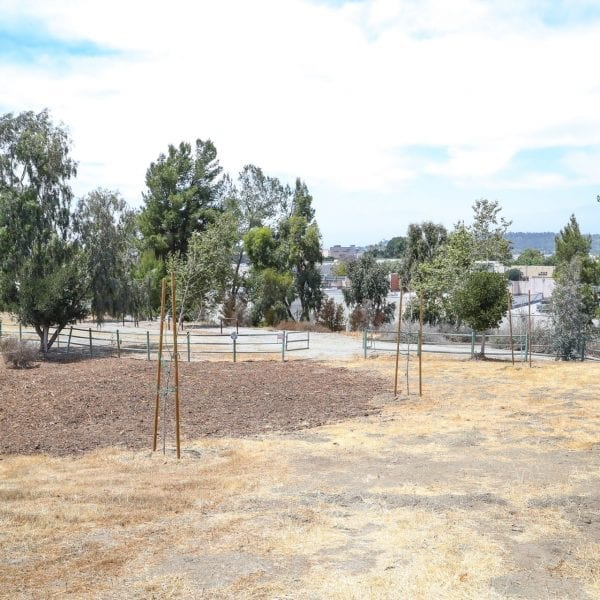 Dirt field, newly planted trees growing