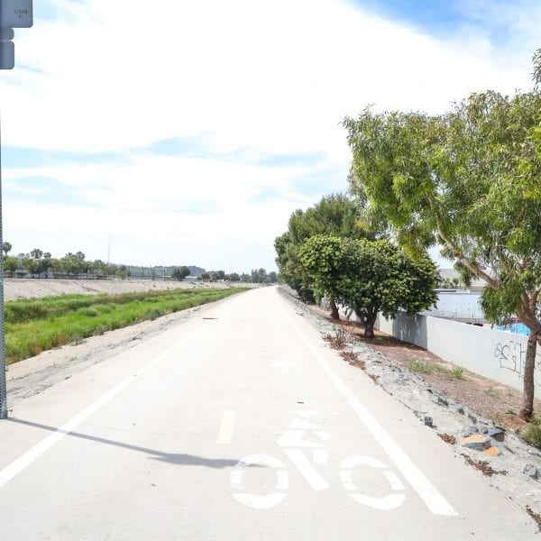 Trees and bicycle path