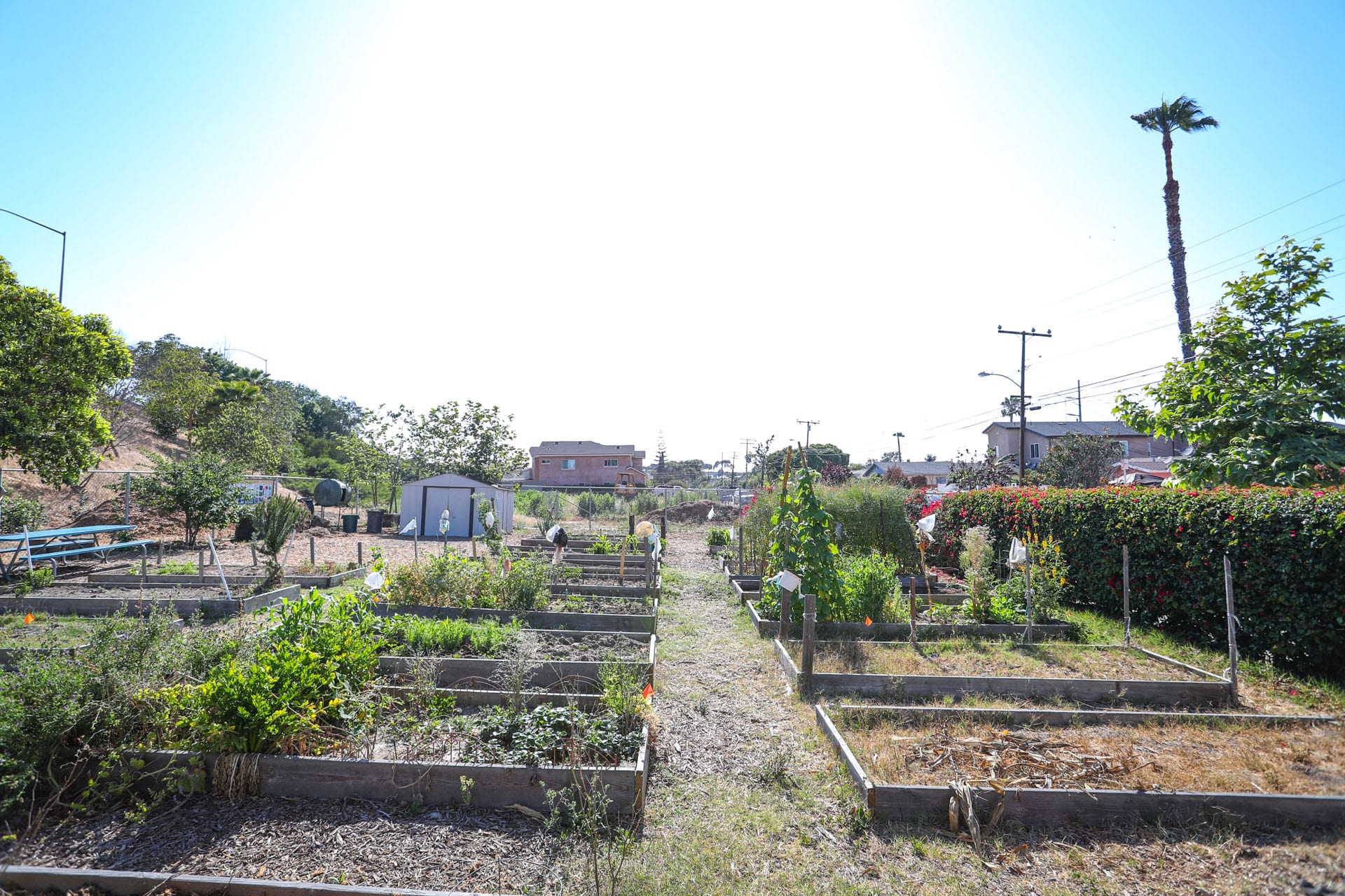 Flower beds in a community garden