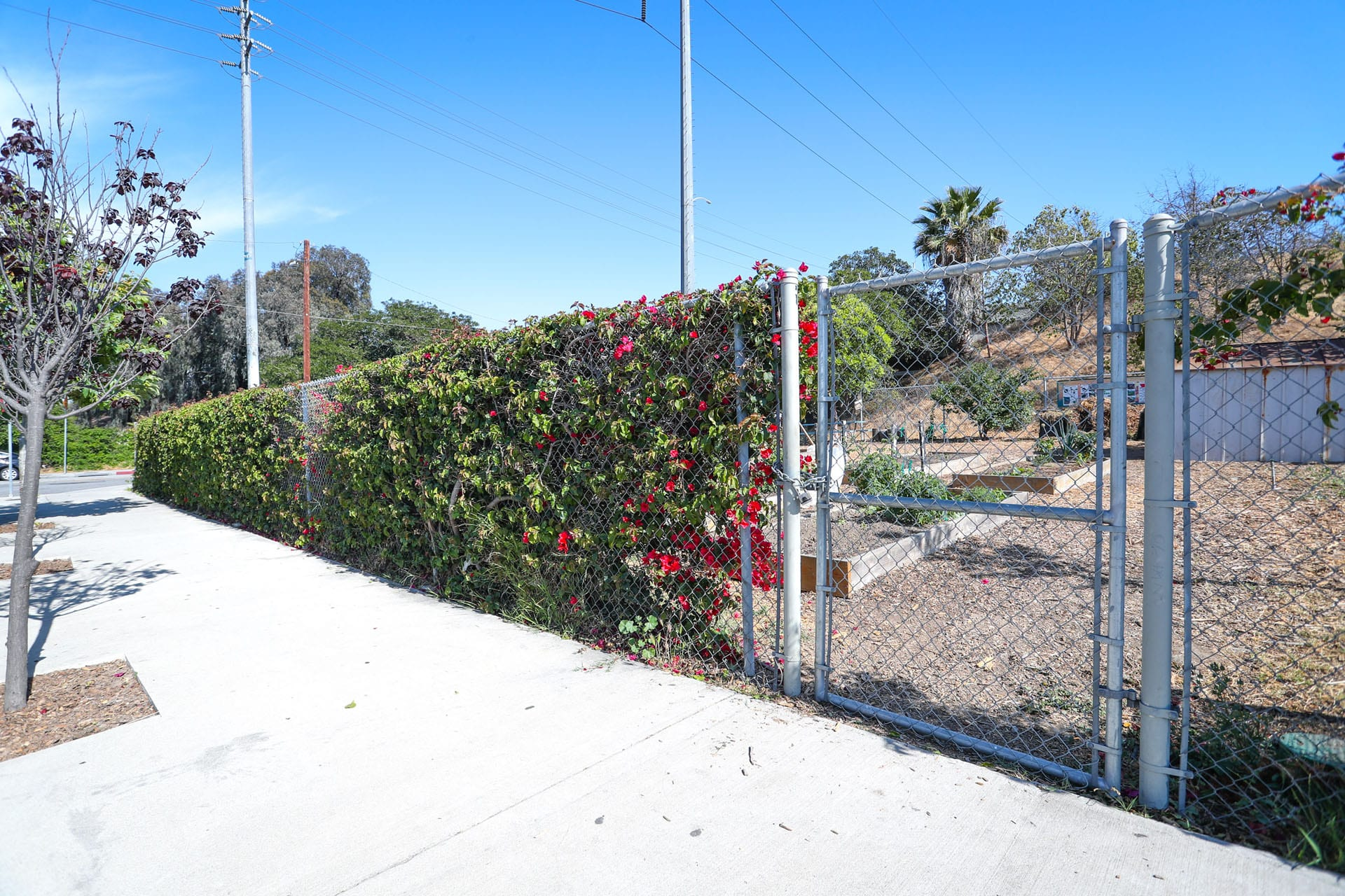 Gate to flower beds