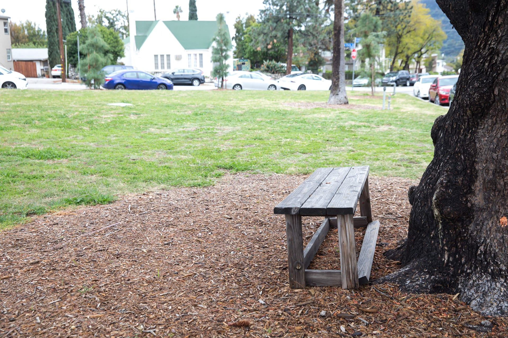 A bench next to a tree in a small park