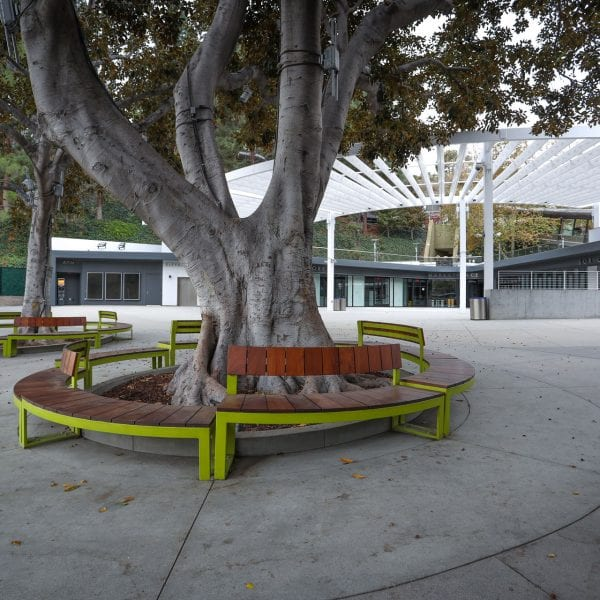 Benches surrounding a tree