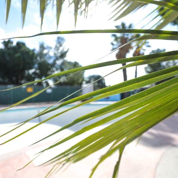 Pool behind palm tree leaves