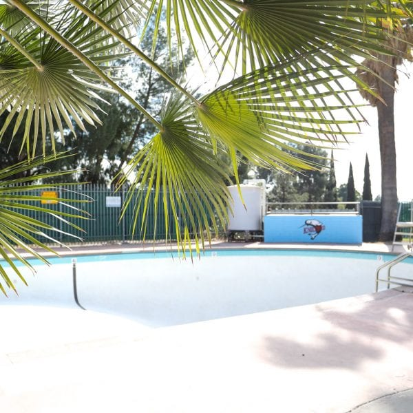 Palm tree leaves in the foreground, pool in the background