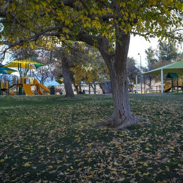 Tree on the lawn in front of playground