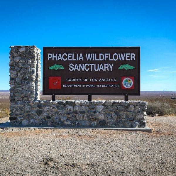 Phacelia Wildflower Sanctuary sign