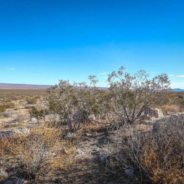 Rocks and shrubs in a desert