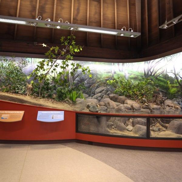 Exhibit of river life