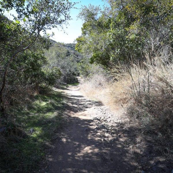 Bumpy trail through tall shrubs
