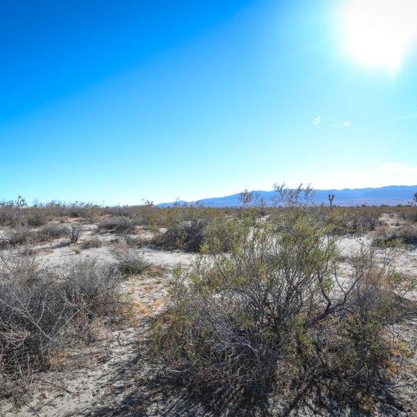 Desert life in the desert