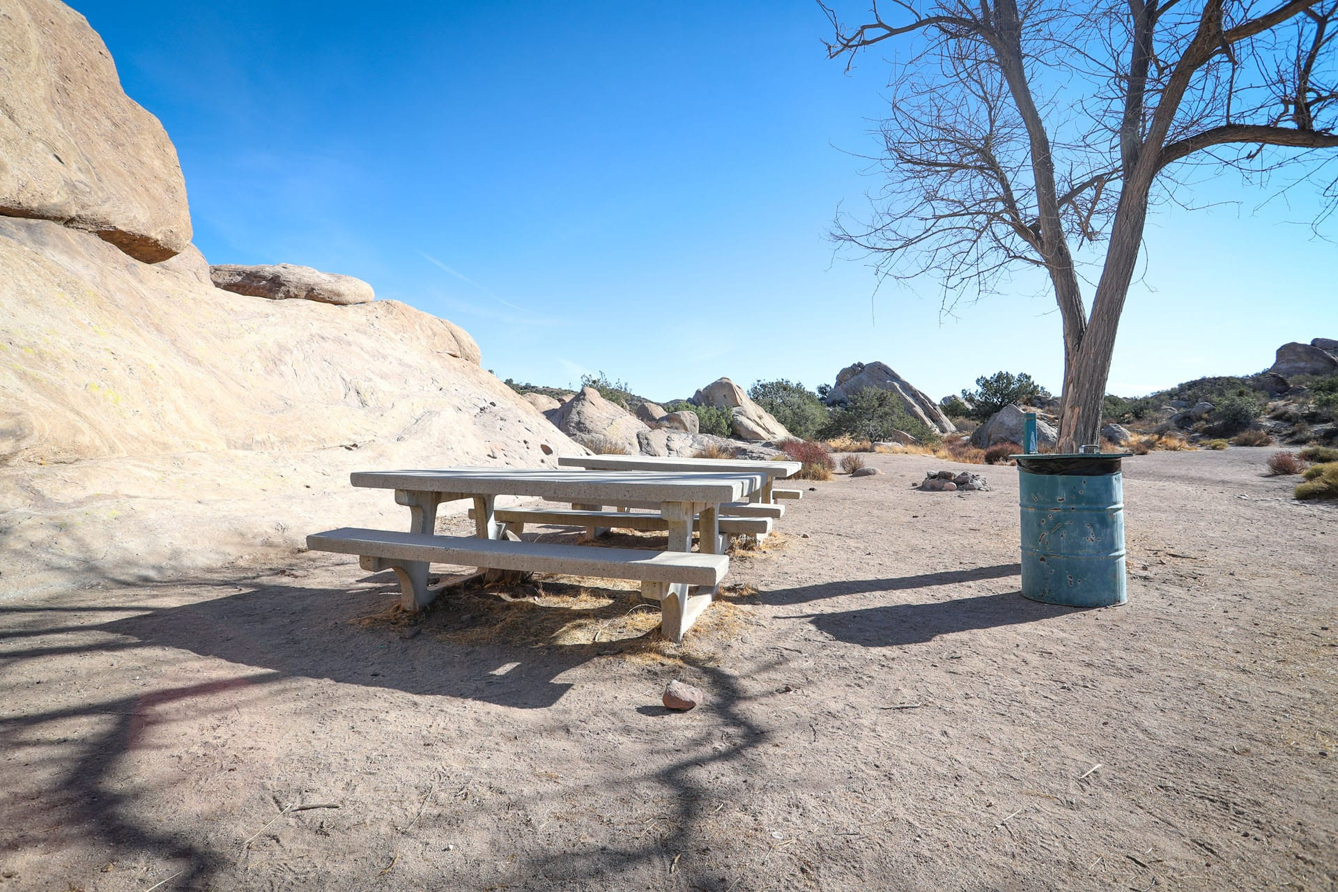 Picnic tables and trash can next to a lone tree on a dirt terrain