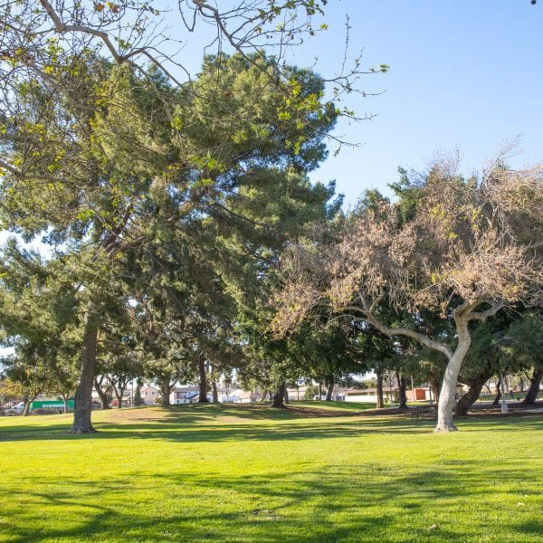 Athens Park trees and grass area